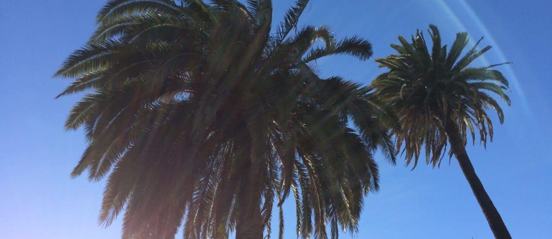Los Angeles - Palmen