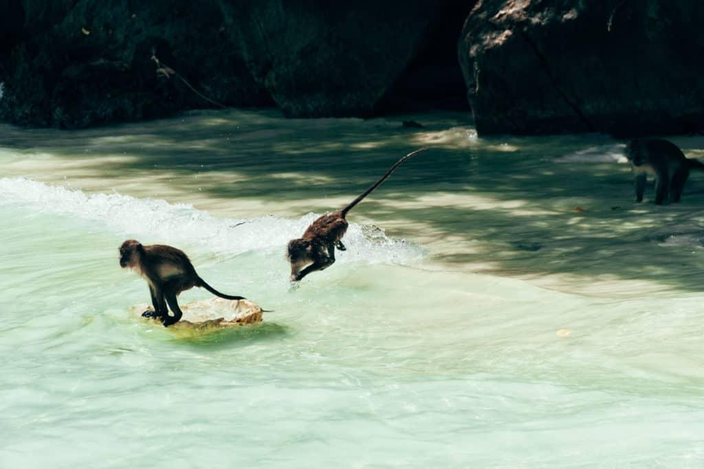 Koh Phi Phi, Thailand, FernwehElixir, Monkey Beach