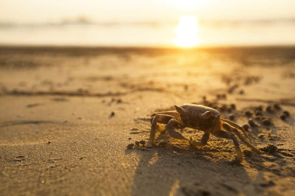 Koh Phra Thong, Thailand, FernwehElixir, Crab, Krabbe